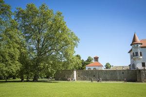 Platan v Budatínskom parku má 270 rokov.