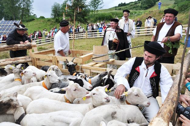 Zázrivské redikaňä - vyháňanie oviec na pašu.