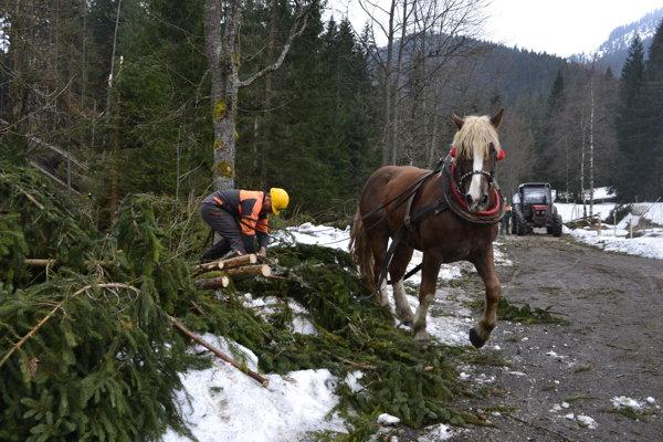 Lesníkom pomáhajú s drevom kone.