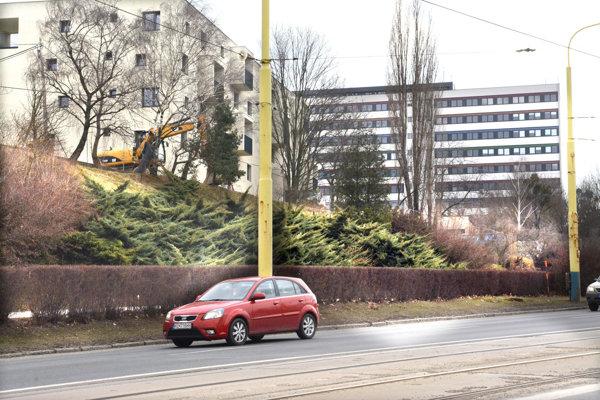 Zeleň pod Novou Terasou. Cestné napojenie na Triedu SNP má viesť od nových domov po svahu. Stromy akríky sa majú vyrúbať.