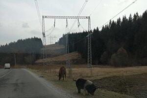 Vodičov nezvyčajná dvojica pri ceste zaujala.