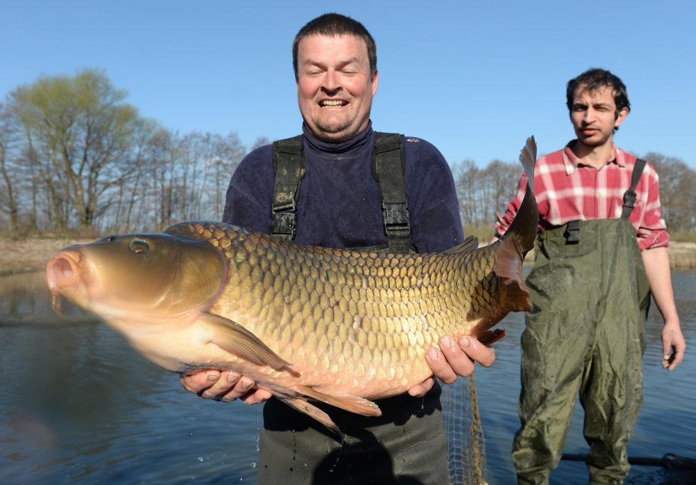 Na Perínskych rybníkoch zarybňujú chovné rybníky rybami z prezimovacej komory,  kde prečkali zimu.