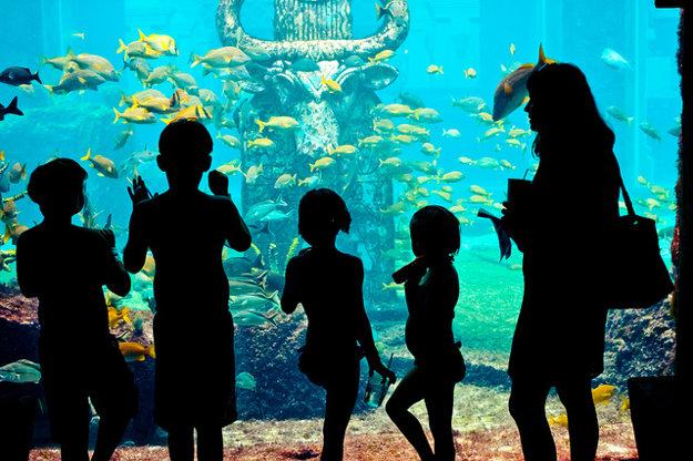 V Nassau si možno naplánovať výlet do ZOO alebo zábavného parku.