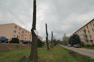 O osude stromov rozhodli obyvatelia bytovky vľavo. Ľudí z domu vpravo sa na názor nepýtali.