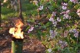 Sviece a zadymovanie. Ako ovocinári bojujú s mrazom