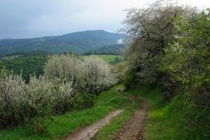 Cesta z hrebeňa, v pozadí Smrekovica v Branisku.