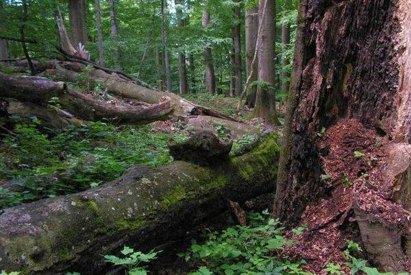 Karpatské bukové pralesy si vyžadujú najvyšší stupeň ochrany.