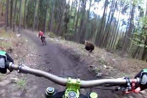 Nečakané stretnutie cyklistov s medveďom.