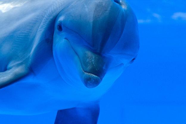 Na Costa Brava si okrem zábavných parkov môžete vychutnať aj návštevu delfinária.