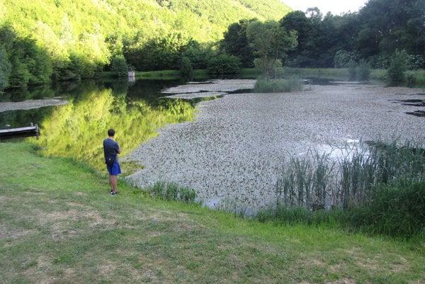 Jazierko pokrývajú riasy.