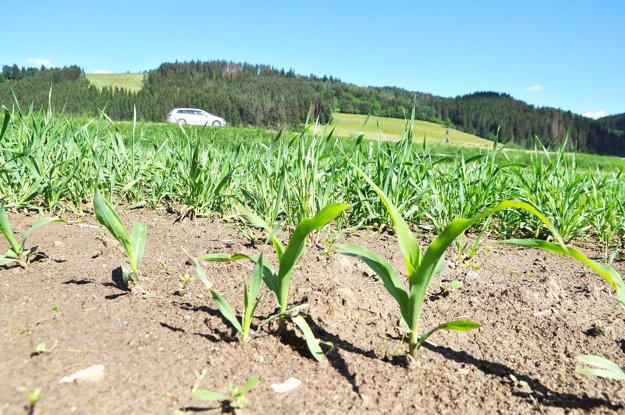 Jačmeň zasiali farmári, kukuricu družstevníci.