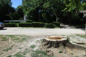 Náhradu za vyše storočnú vŕbu vysadia kúsok od pôvodného stromu.