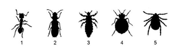 Ktorý obrys patrí ploštici? 1-mravec, 2-termit, 3-voš, 4 ploštica, 5-kliešť