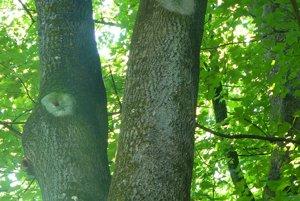 Dutiny po vtákoch. V lete v nich hniezdia operence, na jeseň ich obývajú netopiere.