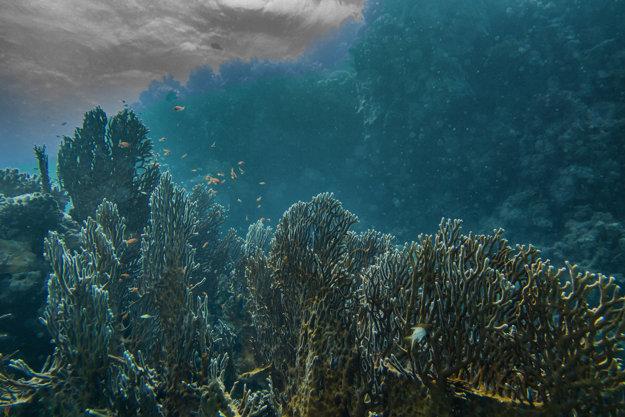 Egypt je už tradične vyhľadávaný najmä pre koraly a podmorský svet.