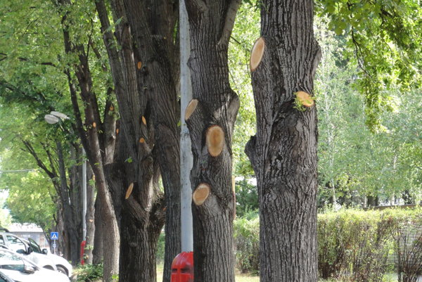 Mesto sa bráni, že stromy pri nemocnici orezalo na podnet policajtov.