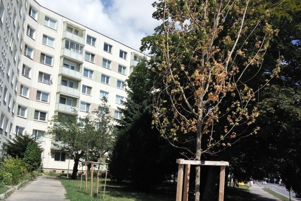 Stromy vysychajú prakticky po celom meste.