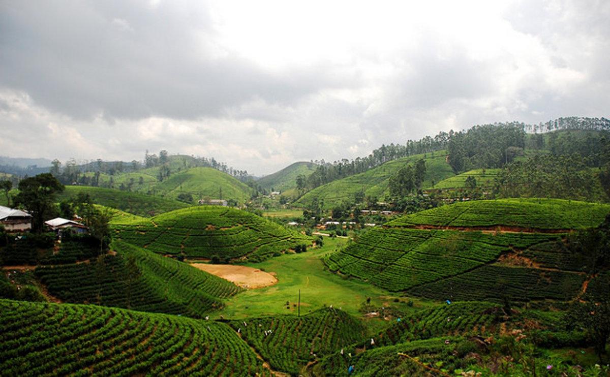 b2d116482 Očarujúca Srí Lanka: malý ostrov plný prekvapení - Cestovanie SME