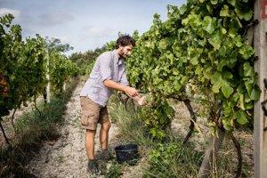 Michal Bažalík sa presťahoval do Svätého Jura a žije vo vinohrade. Má v ňom rád všetky ročné obdobia.