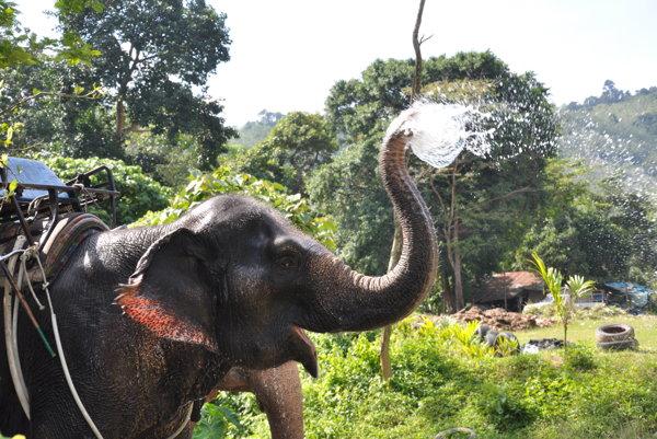 Thajsko - pohodlná dovolenka aj ruch veľkomesta (Cestopis)