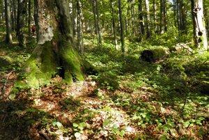 Národný park Poloniny sa nachádza na  severovýchode Slovenska v pohorí Bukovské vrchy  v trojmedzí  hraníc  Poľska , Ukrajiny a Slovenska na vrchu Kremenec.