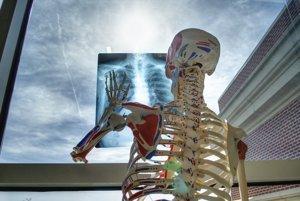 Ľudia zväčša netušia, ako sa volajú orgány v ich tele.