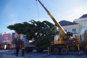Osadenie vianočného stromčeka na Námestí osloboditeľov. Jedľa pochádza zKapušianskej ulice amá približne 20 metrov.