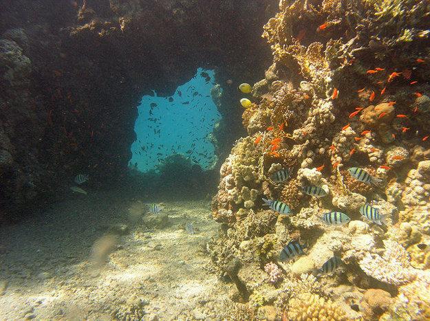 Pobrežie v Eilate sa pýši bohatým a pôsobivým podmorským svetom.