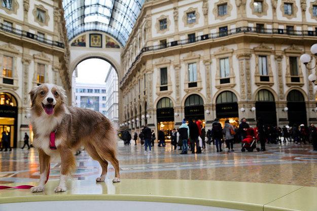 Pri cestovaní záleží na veľkosti a tepmeramente psa.