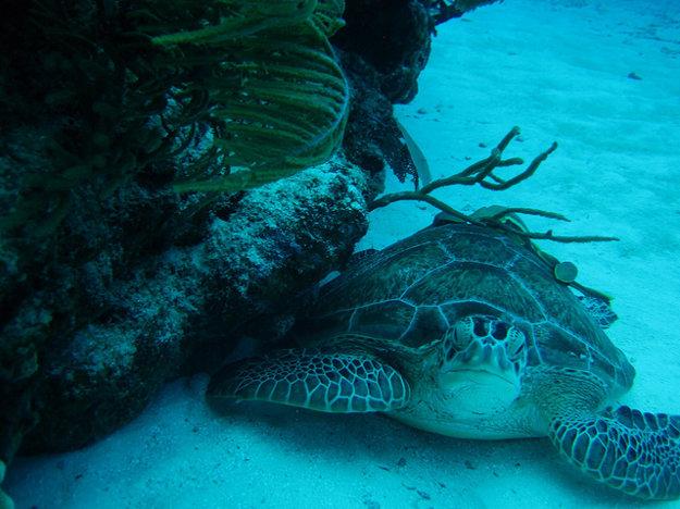 V Tulum si možno vychutnať exotiku aj pod vodou.