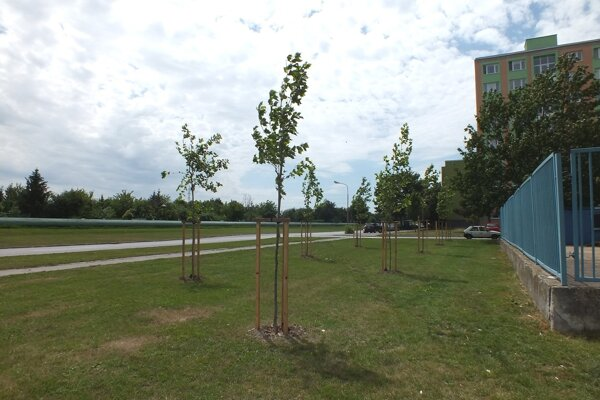 Pred zbernými surovinami vysadili už dávnejšie stromy. Za plotom sa bude parkovať už na celej ploche.