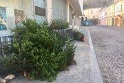 Vianočné stromčeky v centre Trenčína.