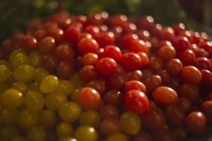 Žlté a červené najmenšie cherry paradajky.