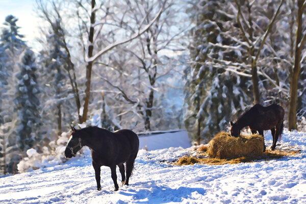 Kone v osade U Kubuši v Oščadnici.