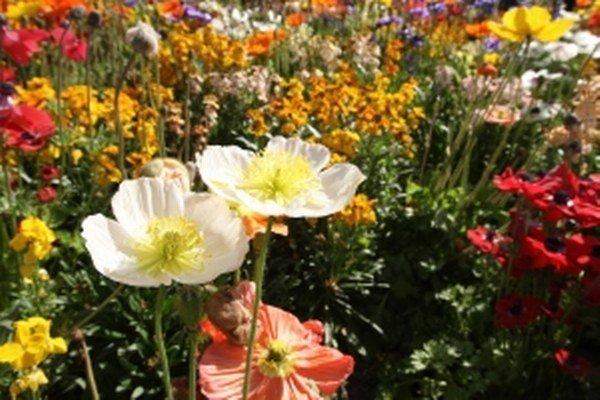 Komunitnú záhradu vyskúšajú na sídlisku Balkán.