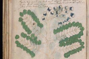 Ilustrácie vo voynichovom rukopise.