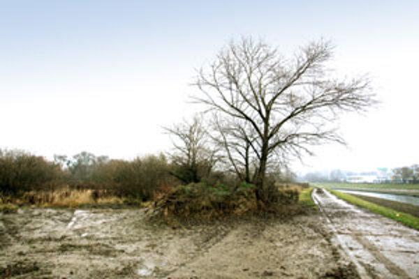 Budúcnosťou Barín sa má v najbližších dňoch zaoberať aj komisia životného prostredia pri mestskom zastupiteľstve.