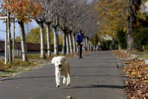 Je pes naozaj najlep��m priate�om �loveka?