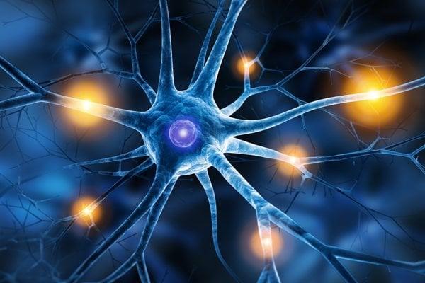 Neuróny v mozgu.