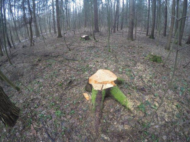 Aj takto to vyzerá v lesoparku.