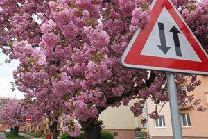 Komenského ulica v ružovom.