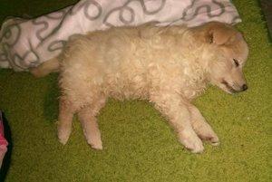 Aspoň na konci života sa psík dočkal pohladenia, pomoci a opatery zverolekára. Ani to mu už život nezachránilo.
