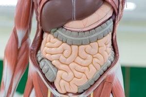 Správne potraviny podporia činnosť tráviacej sústavy, ale aj imunitu tela.