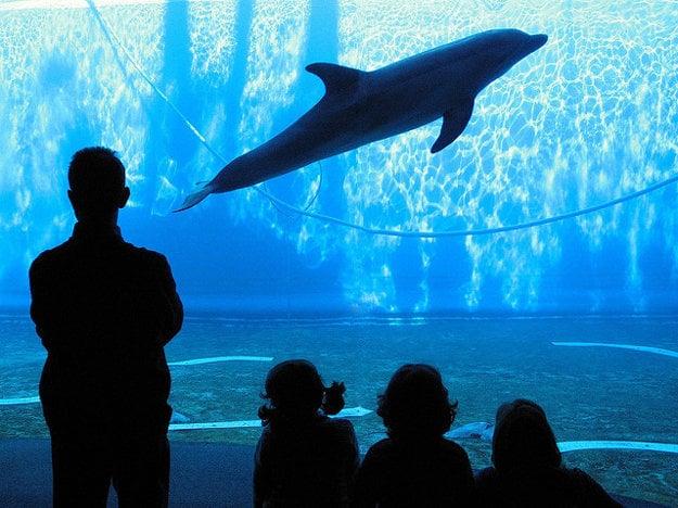 Janovské Aquarium je jedno z najväčších v Európe. Vybudovali ho pre Svetovú výstavu Expo´92.