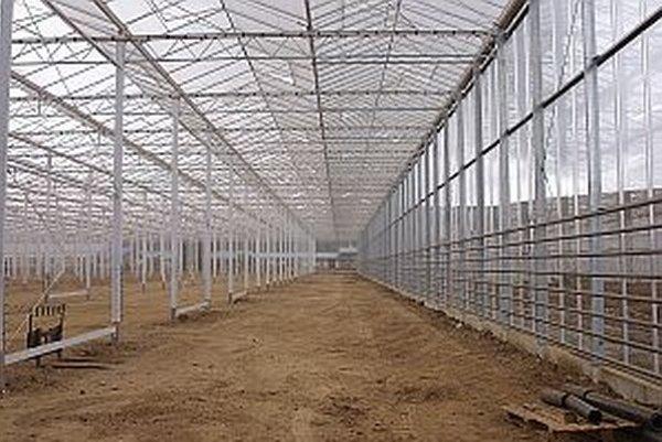 O pár týždňov do skleníka vysadia paradajky.