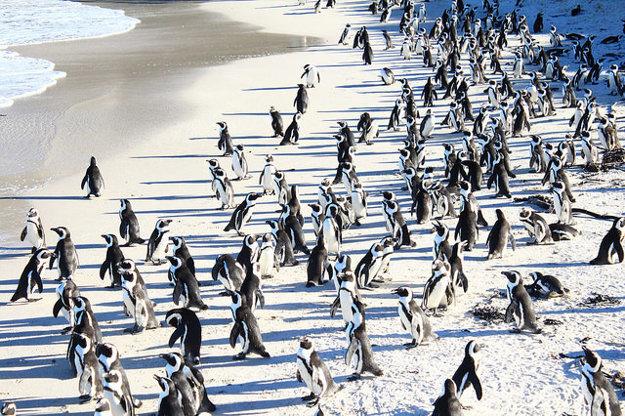 Boulders Beach s tučniakmi.