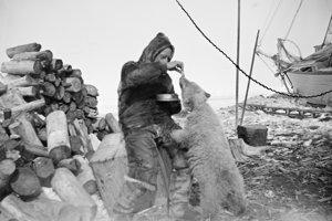 Roald Amundsen kŕmi polárneho medveďa.