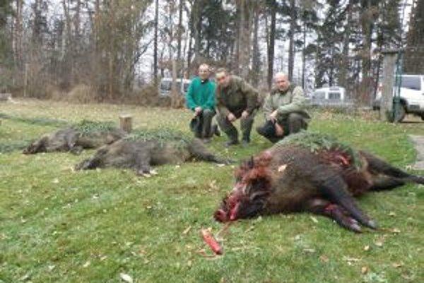 Poľovníci dnes v okolí Hájika lovili diviaky. Najväčší ulovený kanec vážil okolo 160 kg a pred smrťou roztrhal poľovníckeho psa.