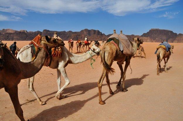 Ísť púšťou na ťave nie je žiadny problém