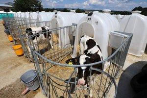 V obci Bzovík otvorili jednu z najväčších mliečnych fariem v strednej Európe.